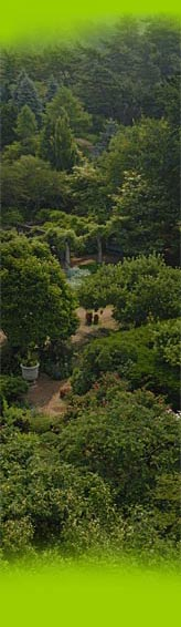 PHOTO: The Garden viewed from above.