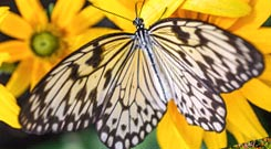 PHOTO: Butterflies & Blooms