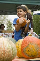 PHOTO: pumpkins at market