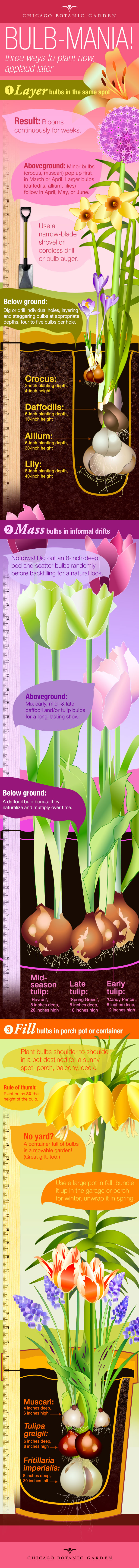 An Infographic on Planting Bulbs