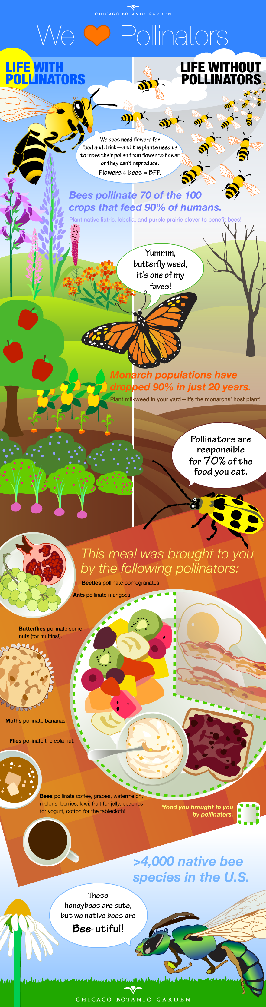 infographic pollinators wed