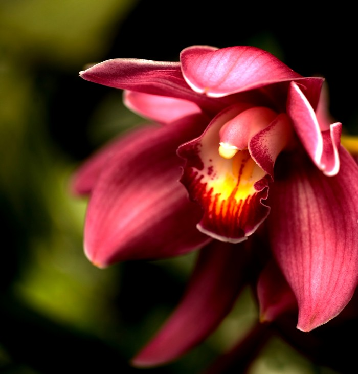 Orchid photo by Carol Isoe.