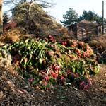 PHOTO: Compost pile