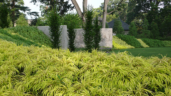 Ornamental Grasses For Fall And Throughout The Year Chicago