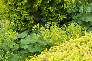 PHOTO: Varying colors and textures keep the Dwarf Conifer Garden landscape interesting.