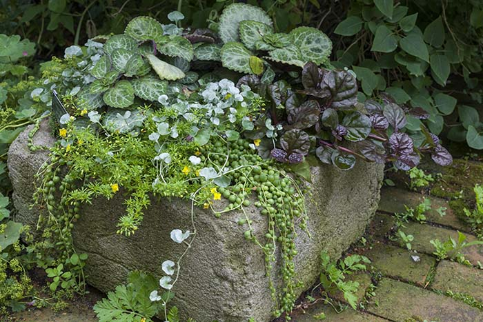 PHOTO: A tiny groundcover trio makes this container pop.