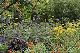 PHOTO: A rainbow of colors in the garden bed.