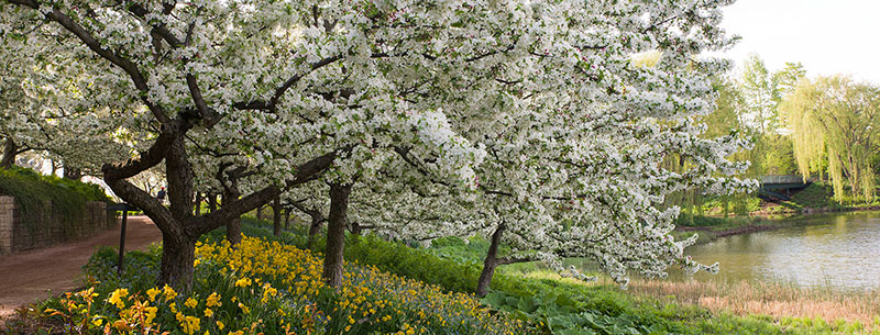 PHOTO: Crabapples in bloom around the Great Basin.