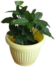 PHOTO: houseplant