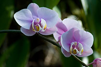 PHOTO: Orchid class