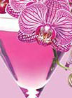 PHOTO: orchid in a martini glass.