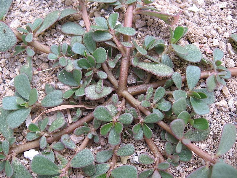 photo - Garden Weeds