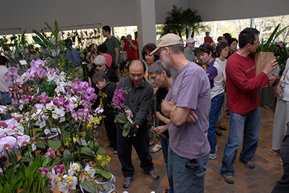 Illinois Orchid Society Spring Show Sale Chicago Botanic Garden