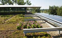 PHOTO: green roof