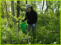 PHOTO: removing garlic mustard