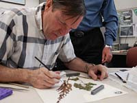 PHOTO: Herbarium Volunteer