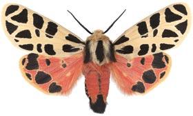 PHOTO: Moth