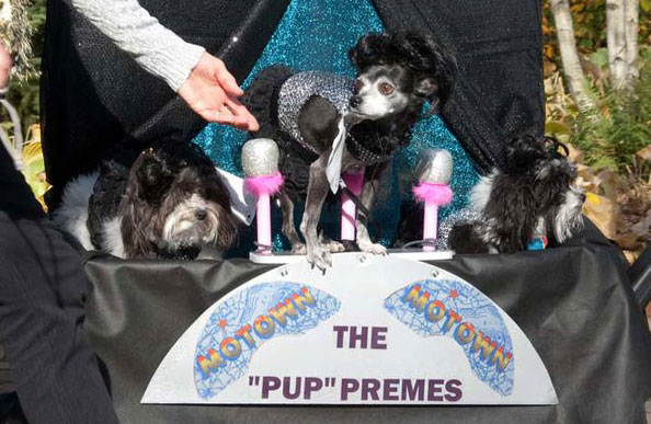 "PHOTO: The ""Pup""premes"