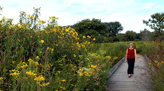 Nice Chicago Botanic Garden