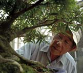 PHOTO man looking at bonsai