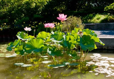 PHOTO: Aquatic Garden