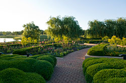 PHOTO: boxwood and willow