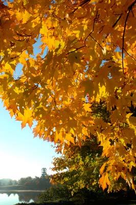 An October Fall Color Tree Walk Chicago Botanic Garden
