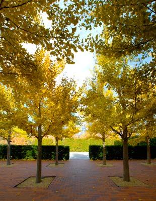 Early Fall Wows Chicago Botanic Garden
