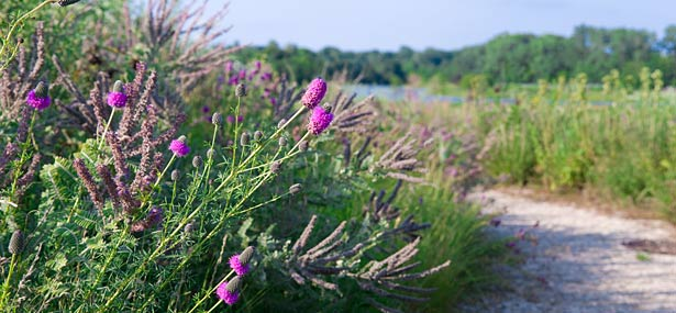 PHOTO: lavender, thistle, blazingstar on the prairie