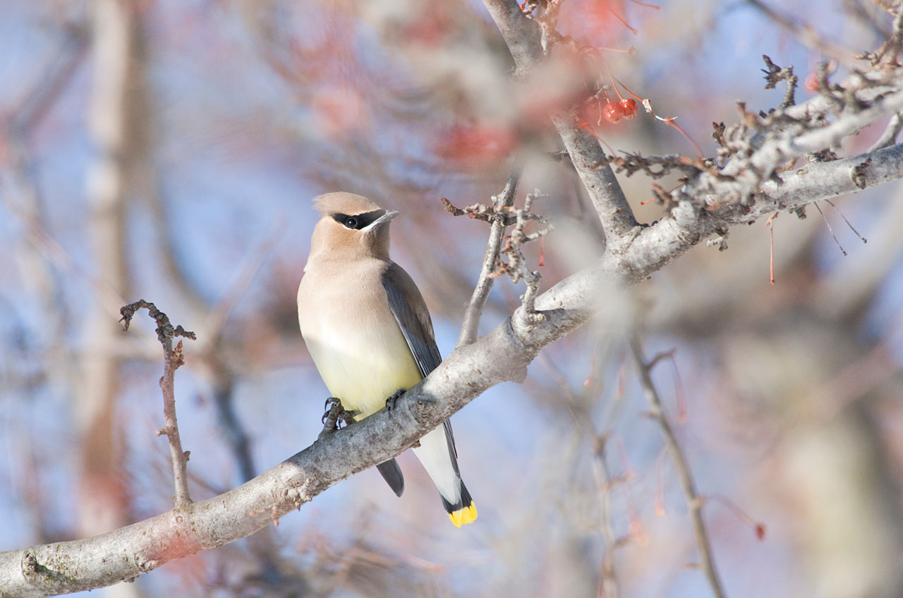 Desktop Wallpaper Birds Chicago Botanic Garden
