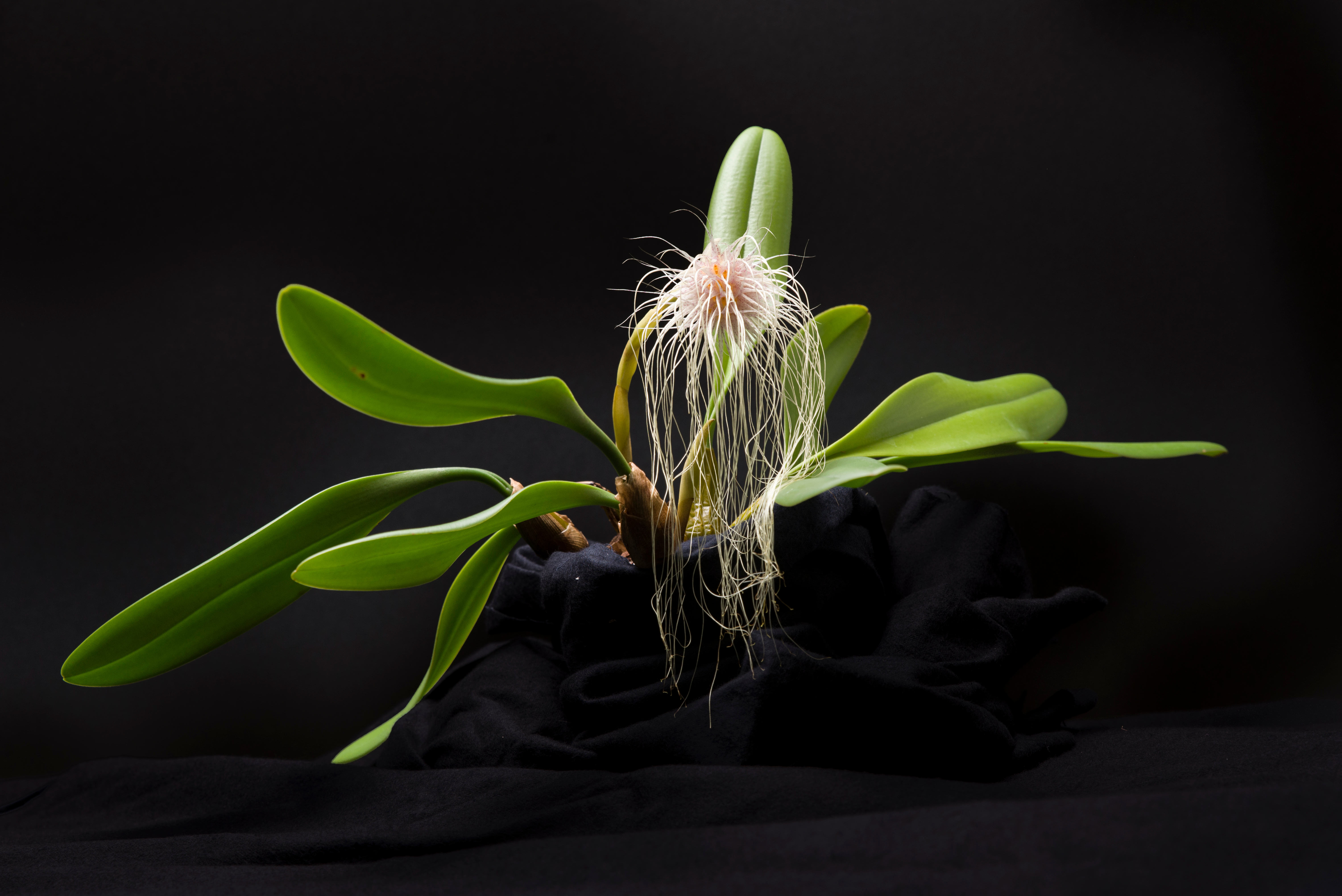 Orchid Desktop Wallpaper Chicago Botanic Garden