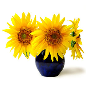 PHOTO: sunflowers in vase.