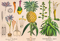 Botanical Charts: 19th Century Classroom Posters