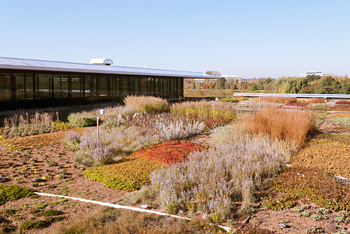 PHOTO: green roof plants