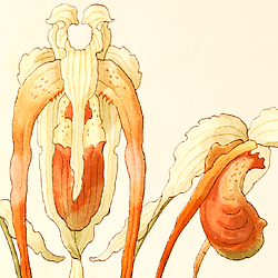 Illustrated Orchids In Radiant Color