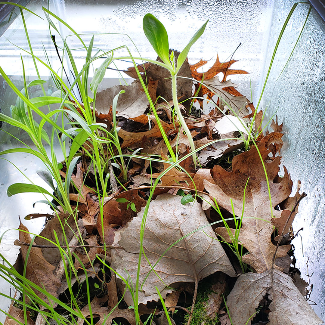 Make an Earth Day Forest Terrarium