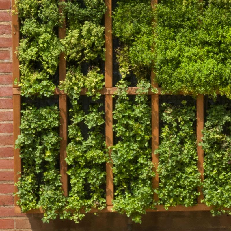 Vegetable Garden Creative Containers