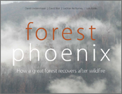 Forest Phoenix: How a Great Forest Recovers from Wildfire