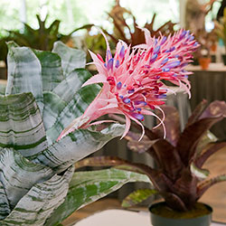Bromeliad Society of Greater Chicago Show & Sale