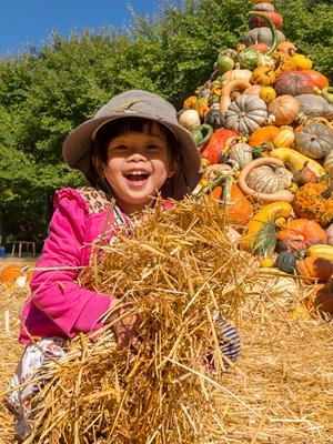 Fall Bulb Festival Hay Maze