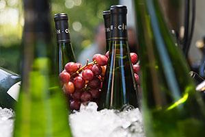 Grapevines & Wines