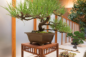 Mid-America Bonsai Show and Sale