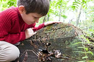 Inspiring Nature Play in Spaces Large and Small