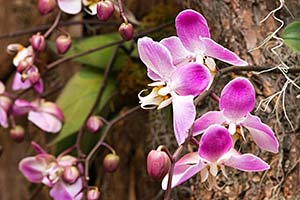 Orchid Show Members' Night
