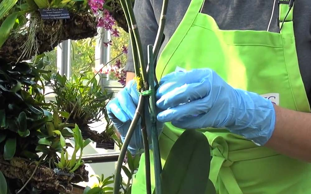 How to Repot Your Phalaenopsis Slide