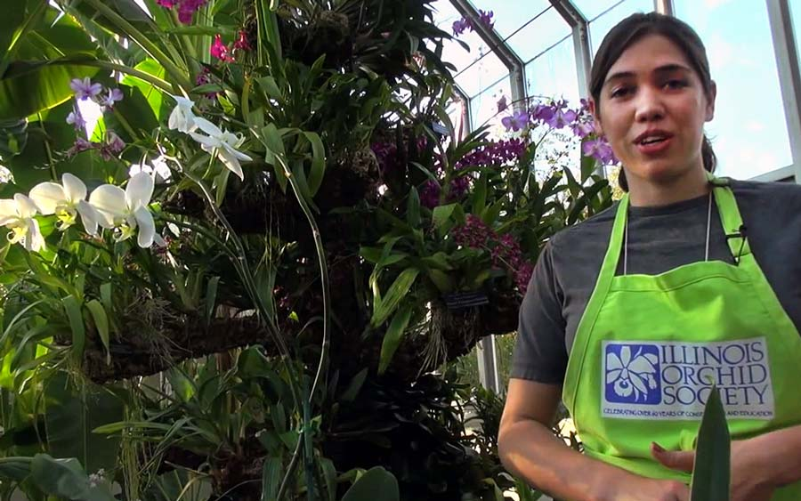 How to Repot Your Phalaenopsis