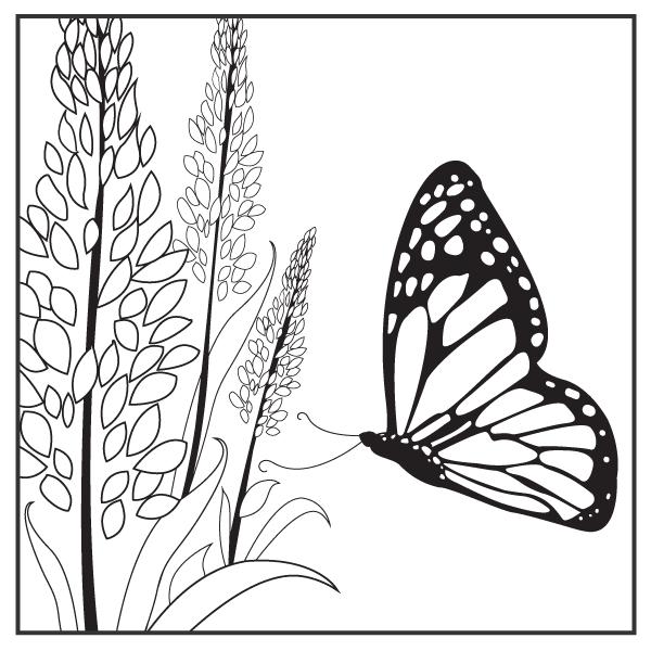 Prairie Plants and Pollinators