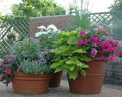 Container garden July