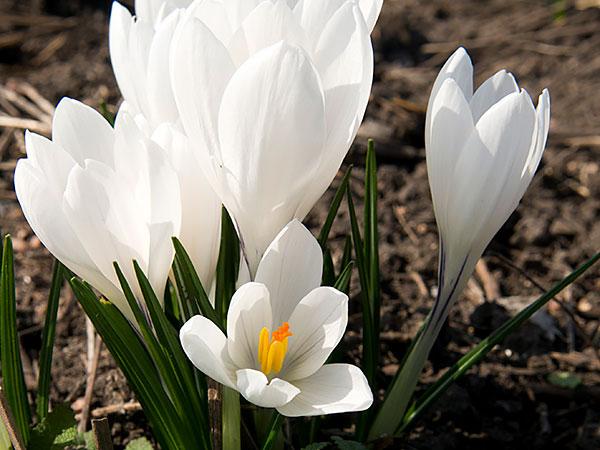 Annual And Perennial Care Checklist Chicago Botanic Garden