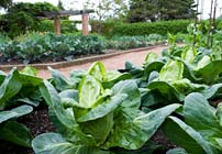 PHOTO: Fruit and Vegetable Garden